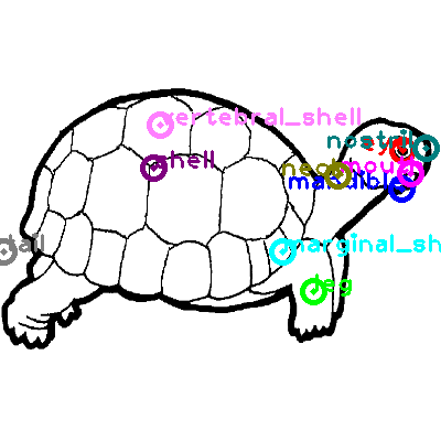 turtle_0019.png