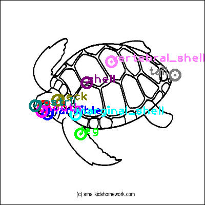 turtle_0020.png