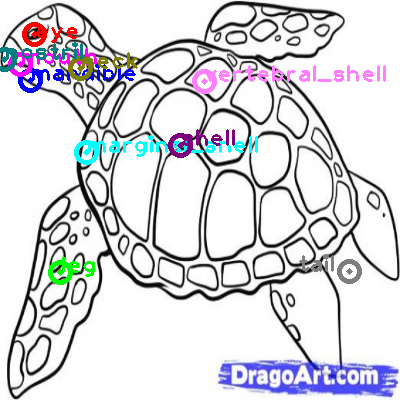 turtle_0021.png