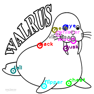walrus_0013.png