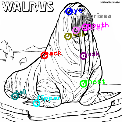 walrus_0027.png