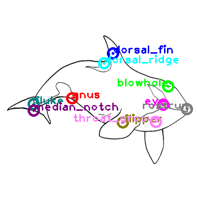 whale_0013.png