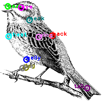 woodpecker_0011.png
