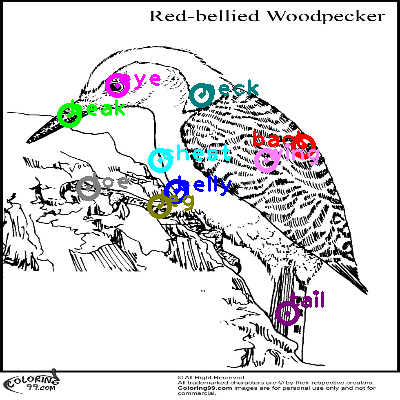 woodpecker_0021.png