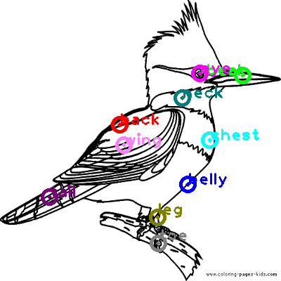 woodpecker_0023.png