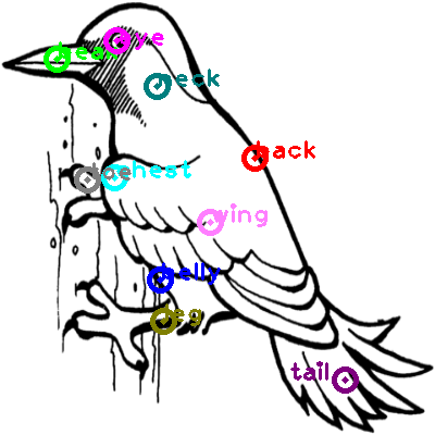 woodpecker_0027.png