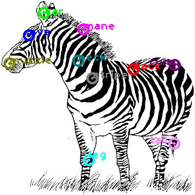 zebra_0017.png