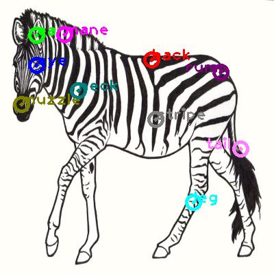 zebra_0018.png