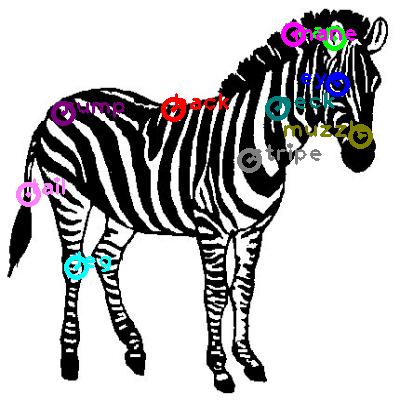zebra_0019.png