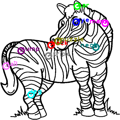zebra_0020.png