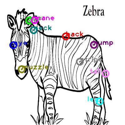 zebra_0024.png