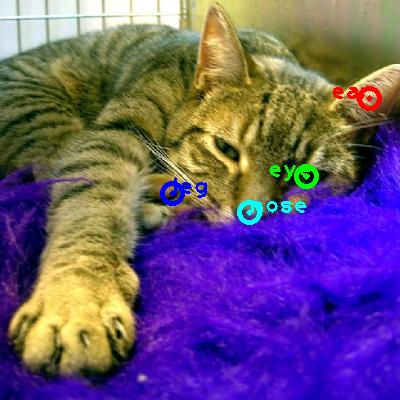 2008_000062-cat_0_ppm10.png
