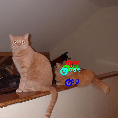 2008_005496-cat_0_ppm10.png