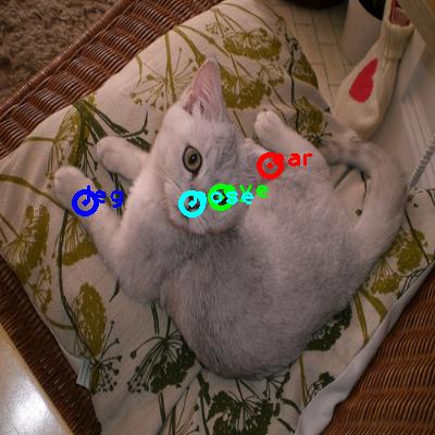 2009_000716-cat_0_ppm10.png