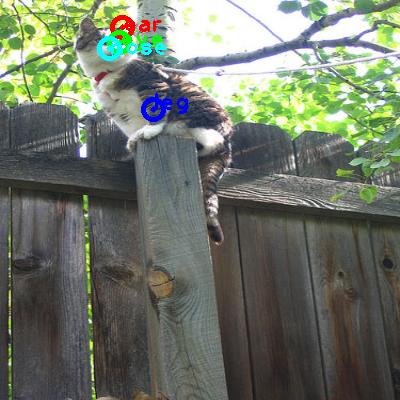 2010_000118-cat_0_ppm10.png