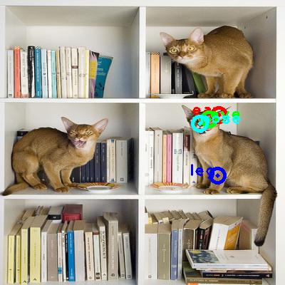 2010_000536-cat_1_ppm10.png