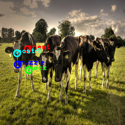 2009_001673-cow_1_ppm10.png