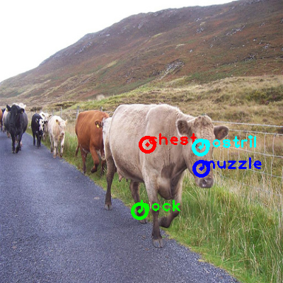 2009_003956-cow_0_ppm10.png