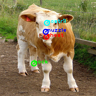 2010_002834-cow_0_ppm10.png