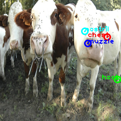 2010_003383-cow_0_ppm10.png
