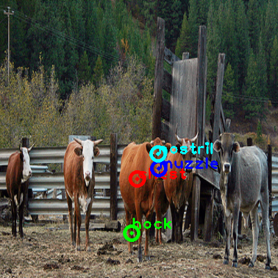 2010_003507-cow_0_ppm10.png