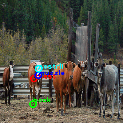 2010_003507-cow_1_ppm10.png