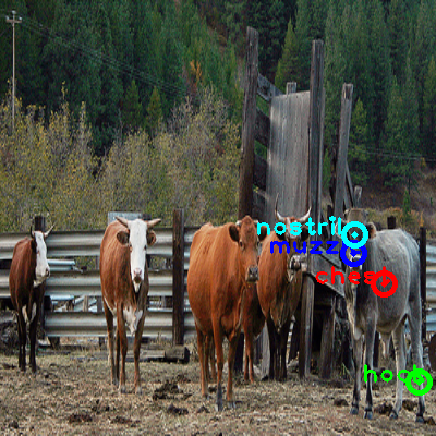2010_003507-cow_2_ppm10.png
