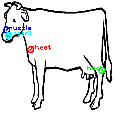 cow_0012_dipart10.png