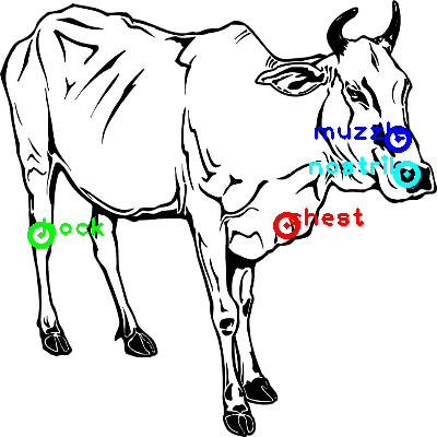 cow_0020_dipart10.png
