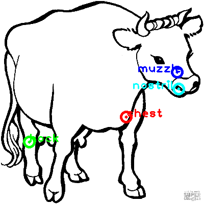 cow_0026_dipart10.png