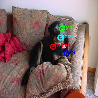 2008_000419-dog_0_ppm10.png