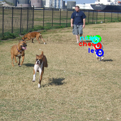 2008_001420-dog_1_ppm10.png