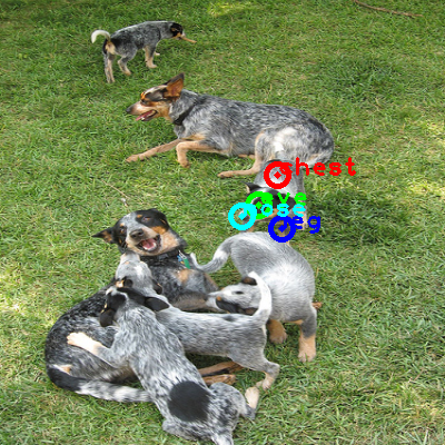 2008_004590-dog_1_ppm10.png