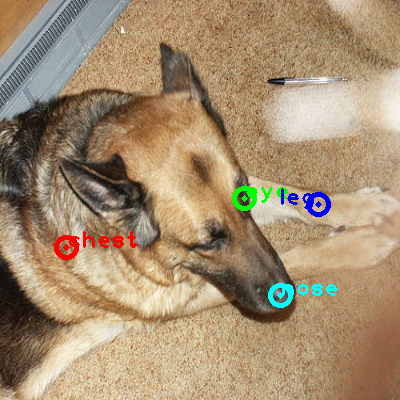 2008_004768-dog_0_ppm10.png