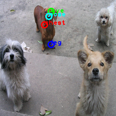 2008_006965-dog_1_ppm10.png
