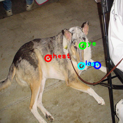 2008_007028-dog_0_ppm10.png