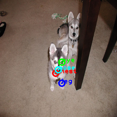2008_007073-dog_1_ppm10.png