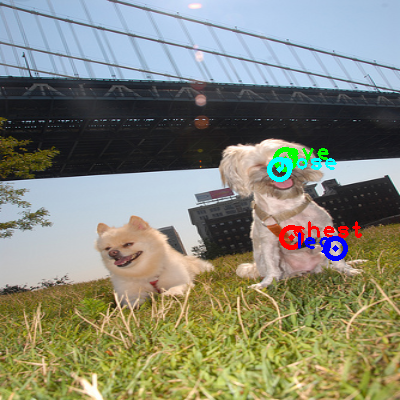 2009_003369-dog_1_ppm10.png
