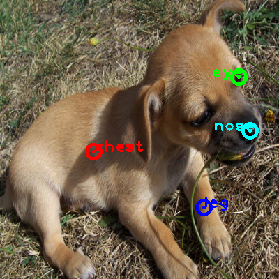 2010_000362-dog_0_ppm10.png