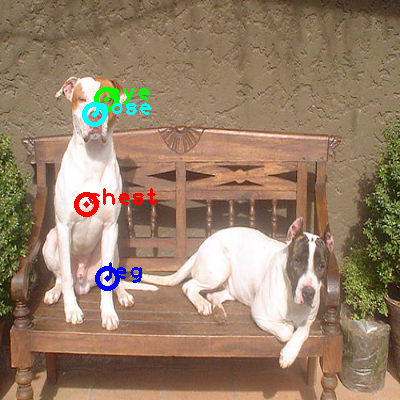 2010_000973-dog_0_ppm10.png