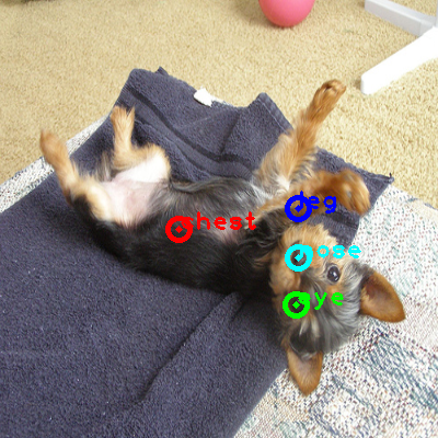 2010_002741-dog_0_ppm10.png