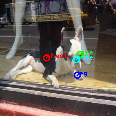 2010_002793-dog_0_ppm10.png