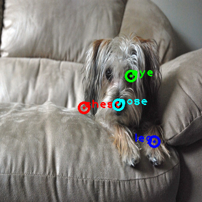 2010_002995-dog_0_ppm10.png