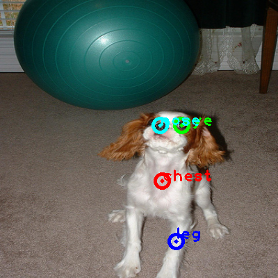 2010_003477-dog_0_ppm10.png