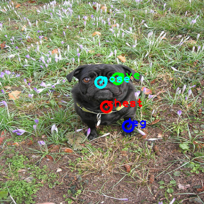2010_004296-dog_0_ppm10.png