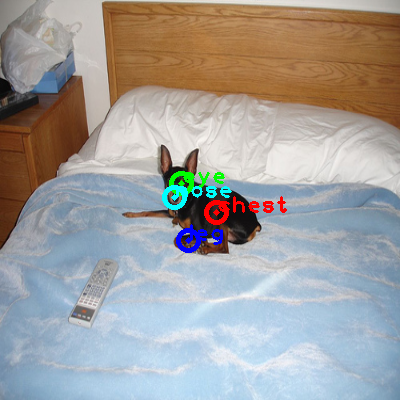 2010_004795-dog_0_ppm10.png