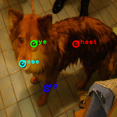 2010_004896-dog_0_ppm10.png