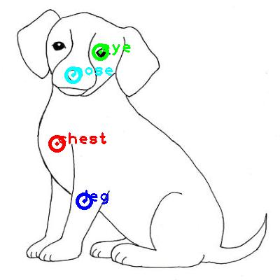 dog_0009_dipart10.png