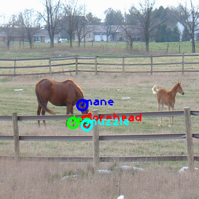 2008_000219-horse_1_ppm10.png
