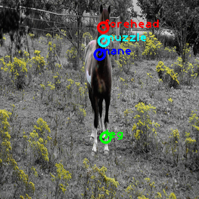 2008_000696-horse_0_ppm10.png